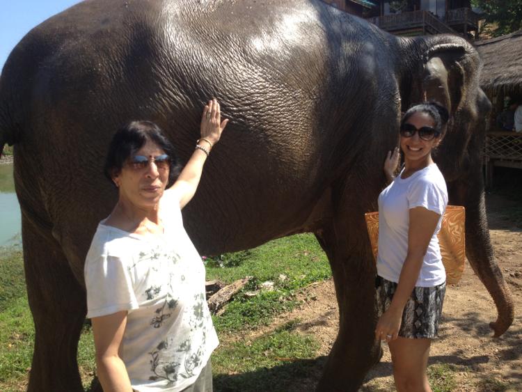 boon lott elephant sanctuary petting elephants